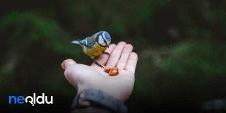 İyilik Sözleri, İyilikle İlgili Sözler, Ayetler, Hadisler