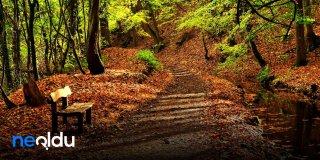 Sonbahar Sözleri, Sonbaharla İlgili Romantik ve Huzurlu Sözler