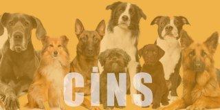 En İyi Köpek Cinsleri & Türleri ve Sevilen Köpek Irkları