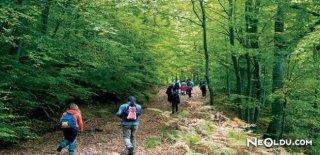 Orman Yürüyüşünün Sağlığımıza Faydaları