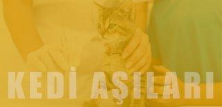 Kedi Aşı Takvimi ve Fiyatları: Yavru ve Yetişkin Kedi Aşıları