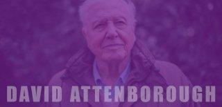 David Attenborough Gezegenimizden Bir Yaşam Konusu ve Hakkında Bilinmesi Gerekenler