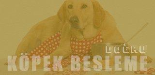 Doğru Köpek Beslenmesi: Köpekler Ne Yer?