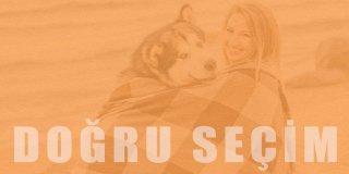 Doğru Köpek Seçimi: Sizin İçin Hangi Köpek Irkı Uygun?