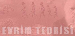 Evrim Hakkında Hiç Duymadığınız 20 İlginç Gerçek