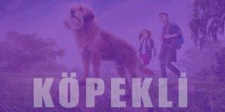 Köpek Filmleri | İnsan Dostu Köpeklerin Birbirinden Güzel 22 Filmi