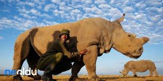 Nesli Tükenme Tehlikesi Olan Hayvanların Listesi | 2021