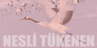 Türkiye'de Nesli Tükenen Hayvanlar | 2021
