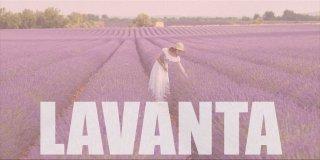 Lavanta Hakkında Bilgiler ve Faydaları