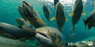 Rüyada Büyük Balık Görmek Ne Demek? Denizde Büyük Balık Görmenin Anlamı ve Yorumu