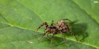 Rüyada Büyük Örümcek Görmek Ne Anlama Gelir? Siyah ve Beyaz Büyük Örümcek Görmenin Yorumu