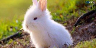 Rüyada Beyaz Tavşan Görmek Ne Anlama Gelir?