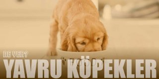 Yavru Köpekler Ne Yer? Neyle Beslenir? | Beslenme Tablosu