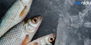 Rüyada Ölü Balık Görmek Ne Demektir?