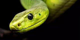 Rüyada Yılan Görmek - Siyah ve Yeşil Yılan Görmek Ne Demek?
