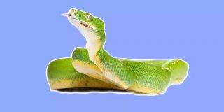 Rüyada Yeşil Yılan Görmek - Kindar İnsanlara Dikkat!