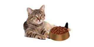 Düşük Kaloriye Sahip En İyi 5 Kısırlaştırılmış Kedi Maması