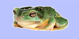 Rüyada Kurbağa Görmek - Evde Yeşil Kurbağa Görmek Ne Demek?