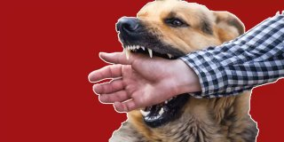 Rüyada Köpek Isırması Görmek Ne Anlama Gelir?