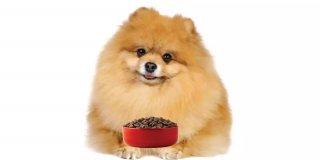 Mineral Deposu En İyi 5 Hindi Etli Köpek Maması Önerisi