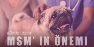 MSM Nedir? Köpeklerde Eklem Kas Gelişimi ve MSM'nin Önemi