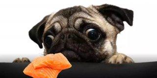 Omega Deposu 2021'in En İyi 5 Somonlu Köpek Maması Tavsiyesi