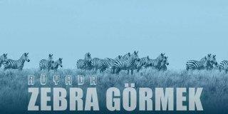 Rüyada Zebra Görmek Ne Anlama Gelir?