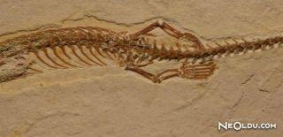 Dört Bacaklı Yılan Fosili Bulundu
