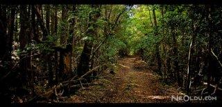 Bu Ormana Giren Bir Daha Sağ Çıkamıyor