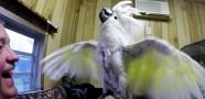 Gözlüklerden Nefret Eden Papağan