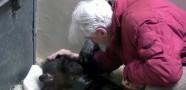 Ölmek Üzere Olan Şempanze Üzdü