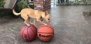 Toptan Topa Zıplayan Köpek
