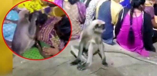 Cenazede Ağlayanları Maymun Teselli Etti!